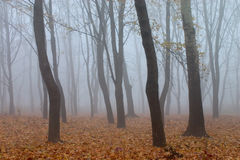 Misty forest in autumn Stock Photography
