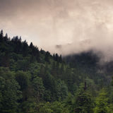 Misty forest in the Autumn mountains Royalty Free Stock Photos