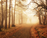Misty forest in autumn Royalty Free Stock Image