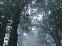 Misty Forest av den Doi Intanon nationalparken Royaltyfri Fotografi