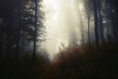 Misty forest background in autumn royalty free stock image