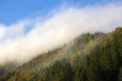 Misty forest in the Bavarian mountains Royalty Free Stock Photography