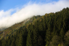 Misty forest in the Bavarian mountains Royalty Free Stock Photos