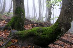 Misty forest. A beginning of autumn in forest Royalty Free Stock Photography