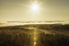 Misty forest in Belarus. Misty beech forest on the sunrise morning in the autumn Royalty Free Stock Image