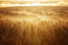 Misty forest in Belarus. Misty beech forest on the sunrise morning in the autumn Royalty Free Stock Photo
