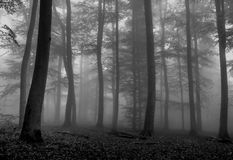 Misty Forest in BW royalty-vrije stock foto's
