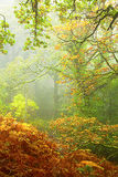 Misty Forest Colours Fotos de archivo libres de regalías