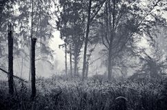 Misty Forest in Coney Island Park Singapore Royalty Free Stock Photography
