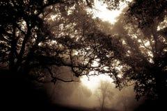 Misty forest dark Royalty Free Stock Photo