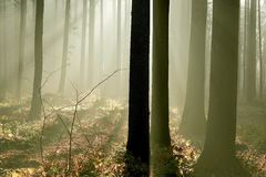 Misty forest with early morning sun rays stock photos