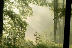 Misty forest with early morning sun rays royalty free stock photo