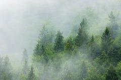 Misty forest Stock Photos