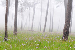 Misty forest with flowers on the ground Royalty Free Stock Photography