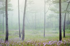 Misty forest with flowers on the ground Stock Photos