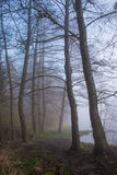 Misty forest. Misty forest with foggy morning Royalty Free Stock Photography