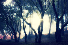 Misty Forest Royalty Free Stock Images