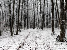 Misty forest fresh snow early winter royalty free stock photos