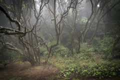 Misty forest. Of Gomera Island Stock Photography