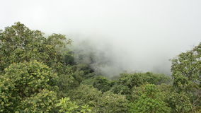 Misty in forest. HD. Clouds at rain forest, time lapse. HD stock video footage