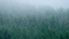 Misty Forest In Heavy Rain. Forested hillside in the mist on rainy day stock footage