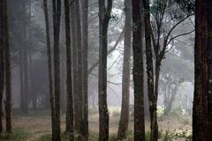 Misty Forest In India Stockfotos