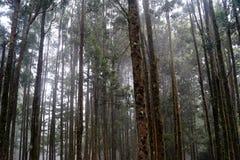 Misty Forest In India imagem de stock