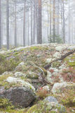 Misty forest landscape Royalty Free Stock Photography