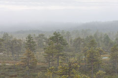 Misty forest in marsh Stock Photography