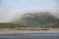 Misty Forest mit Treibholz auf der Küste an Rialto-Strand Olympischer Nationalpark, WA Stockfotos