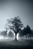 Misty Forest Morning Royalty Free Stock Photos
