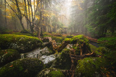 Misty forest. Misty morning in mountain, Bulgaria Royalty Free Stock Image