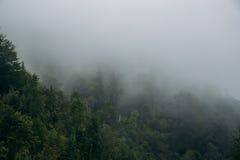 Misty Forest Mountain Nature Background in Caucaso del nord fotografia stock libera da diritti