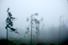 Misty forest in the mountains Royalty Free Stock Photography