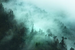 Misty forest in the mountains Royalty Free Stock Photo
