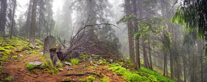 Misty forest in the mountains Royalty Free Stock Images