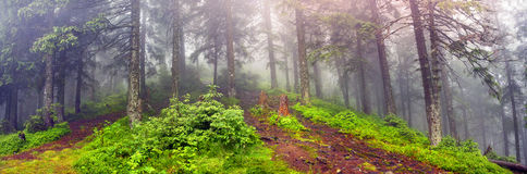 Misty forest in the mountains Stock Images