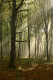 Misty forest Royalty Free Stock Photos