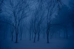 Misty forest by night Royalty Free Stock Photo