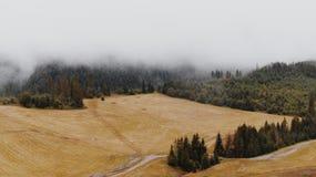 Misty Forest och fält Arkivfoto