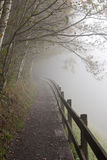Misty forest path Royalty Free Stock Images