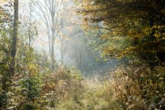 Misty forest path Royalty Free Stock Photo