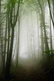 Misty forest path Stock Photos