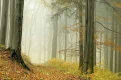 Misty forest path at the end of autumn royalty free stock image