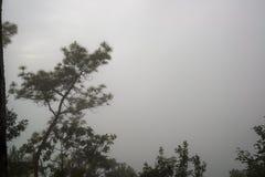 Misty Forest pendant la saison d'hiver, sentiment effrayant Image libre de droits