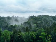 Misty forest. Photo of a misty forest with overcast sky Stock Image