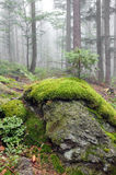 Misty forest after rain. Stock Photography
