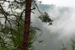 Misty forest in rainy day. Royalty Free Stock Photos