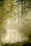 Misty forest river with early morning sun rays