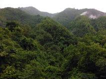 Misty Forest rural en el Himalaya más bajo Foto de archivo